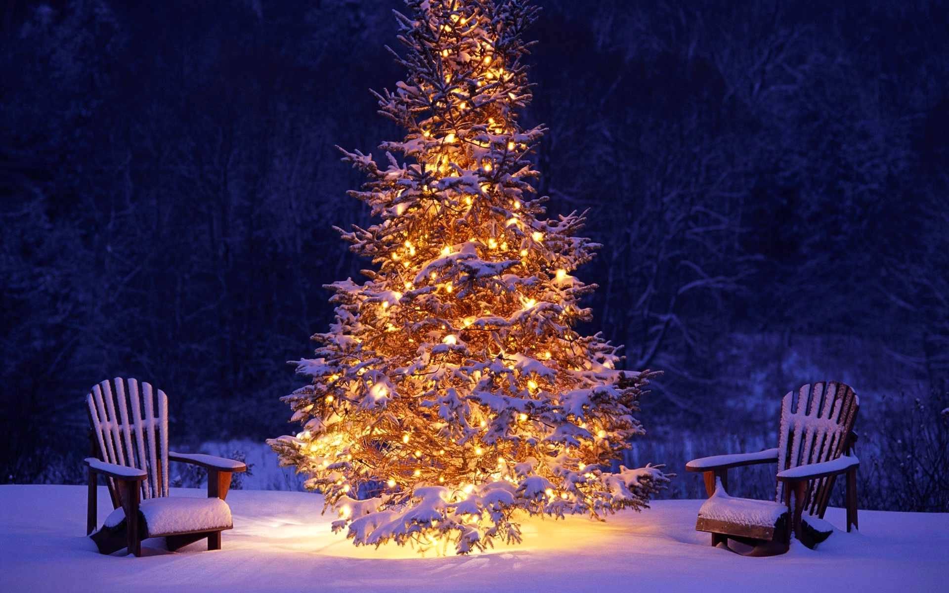 Immagini Natale Movimento.Il Natale Sei Tu Movimento Dei Focolari Liguria